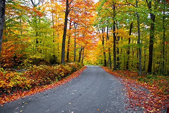 fall_color_fall_foliage_road_trip